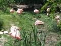 Flamingos Akron Zoo