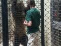 Grizzly Bear Feeding Akron Zoo