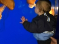 Toddler and Jellyfish at Akron Zoo