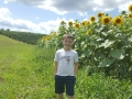 Sunflower-Field-at-Arrowhead-Orchard