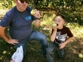 apple picking at Arrowhead Orchards