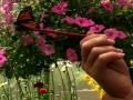 Butterfly House Beech Creek Gardens Alliance Ohio