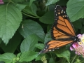 Butterfly House Beech Creek Gardens
