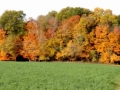 Beautiful Fall Foliage at Beriswill Farms