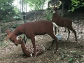 Life sized LEGO Deer Family
