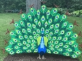Life sized LEGO Peacock