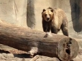 Bears at Cleveland Zoo
