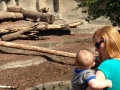 Looking at the Bears at Cleveland Zoo