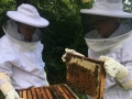 Learning Beekeeping Summer Camp Crown Point Ecology Center
