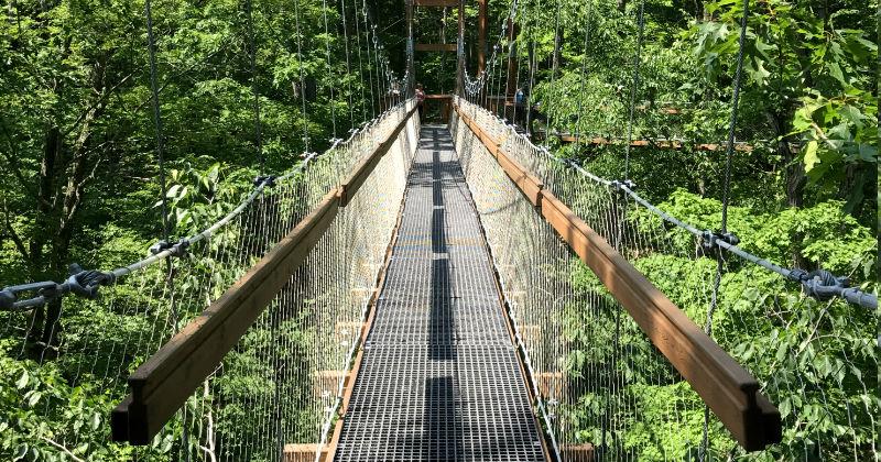 Canopy Walk in Trees Holden Arboretum Ohio