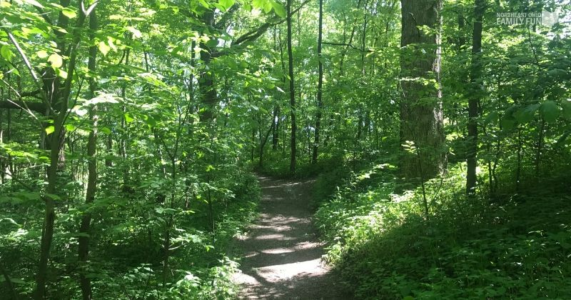 Jackson-Bog-State-Nature-Preserve-2