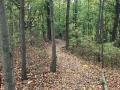 Jackson-Bog-State-Nature-Preserve-4