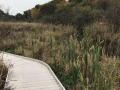 Jackson-Bog-State-Nature-Preserve-6