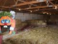 kingsway-pumpkin-farm-hay-maze-png