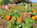 maize-valley-pumpkin-patch-png