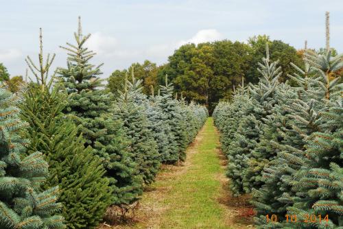 christmas tree farm in new lyme ohio - Christmas Tree Farms In Ohio