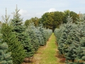 Christmas Tree Farm in New Lyme Ohio