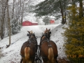 Wagon Rides to Cut Your Own Christmas Tree Manners