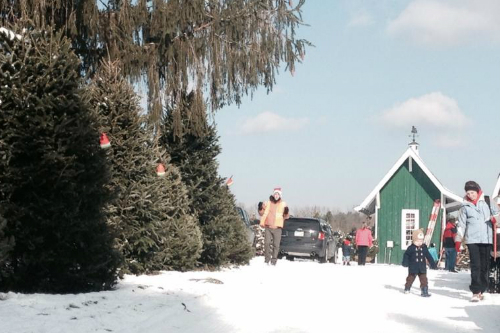 Fresh Christmas Trees Medina Ohio