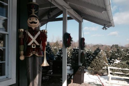 Holiday Fun at Medina Christmas Tree Farms