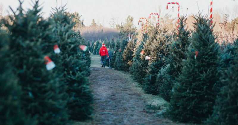 Medina Christmas Tree Farm Ohio