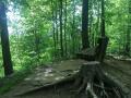 ONeil-Woods-Metro-Park-Ohio-3