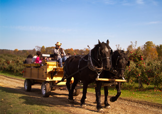 Hay Rides at Patterson Fruit Farm Fall Festival