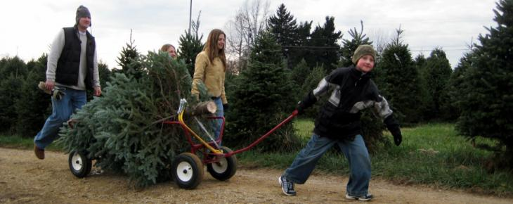 Choose Your Perfect Christmas Tree at Pine Tree Barn Ohio