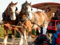 horse_drawn_wagon_rides_at_pioneer_trails_tree_farm