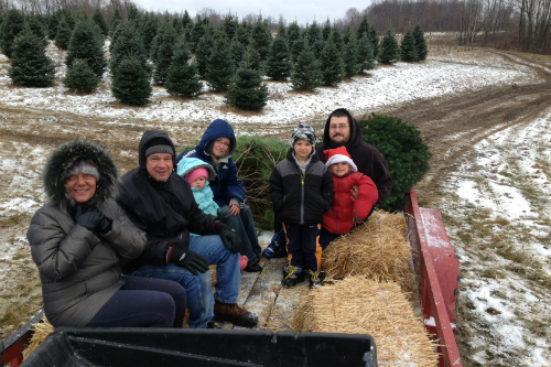 Christmas Trees at Storyland Christmas Tree Farm