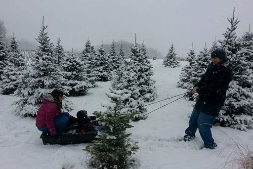 Family Fun at Storeyland Christmas Tree Farm