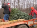 Cutting Down Christmas Trees at Storeyland Farm Ohio