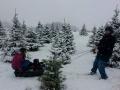 Family Fun at Storeyland Christmas Tree Farm