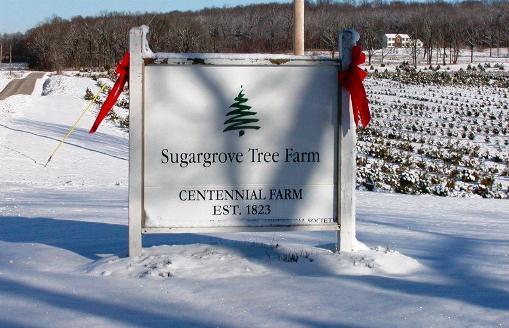 sugargrove tree farm ashland ohio beautiful_christmas_trees_at_sugar_grove_tree_farm cut_your_own_christmas_trees_near_columbus_ohio - Christmas Tree Farms In Ohio