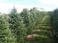 Sugargrove Christmas Tree Farm Ohio