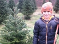 Cutting Down Christmas Trees at Sugar Pines Ohio