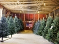 Fresh Cut Christmas Trees Available at Sugar Pines Farm Ohio