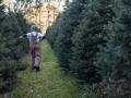 Top Christmas Tree Farm Ohio Sugar Pines