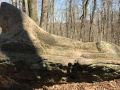 Wordens-Ledges-Cleveland-Metroparks-3
