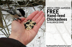FREE Hand Feed Chickadees at Beech Creek Gardens Alliance Ohio