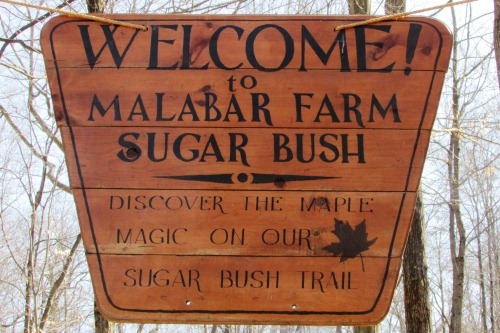 Malabar Farm Sugar Bush Trail