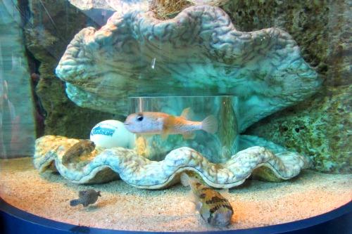 Aquarium Tickets Myrtle Beach
