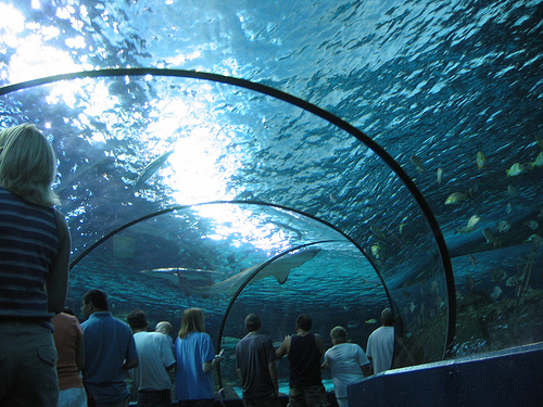 Underwater Tunnel at Ripley's Aquarium