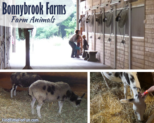 Animals at Bonnybrook Farms