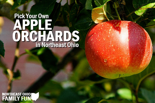Pick Your Own Apples in Northeast Ohio