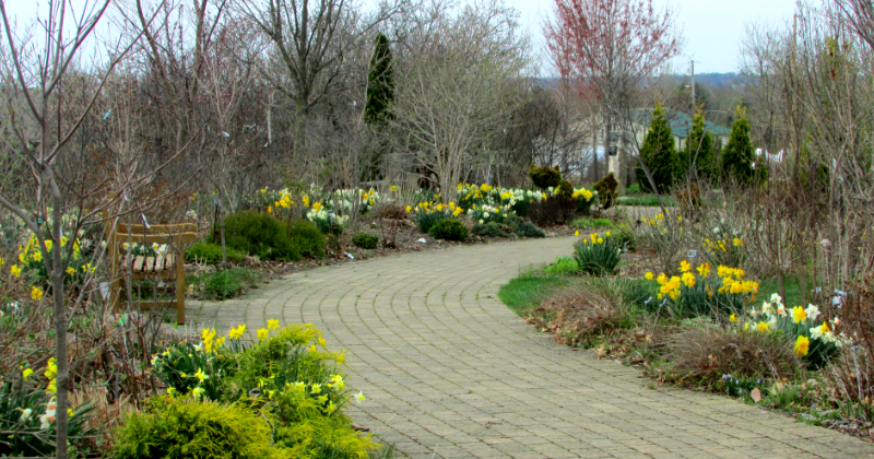 Paved Walkways through Secrest Arboretum