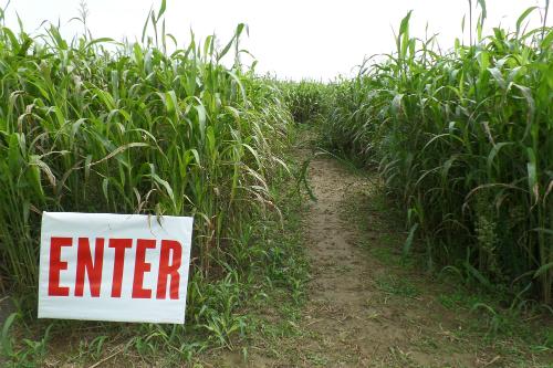 Corn Maze at Arrowhead Orchards