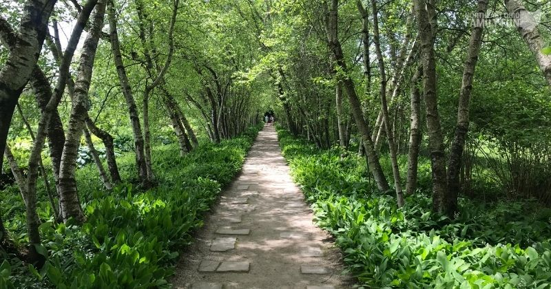13 Botanical Gardens in Northeast Ohio: Guaranteed to Delight All Ages