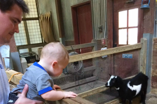 Looking at the Farm Animals at Cleveland Zoo