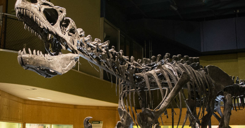 40+ Fascinating Museums in Northeast Ohio Your Family Will Love